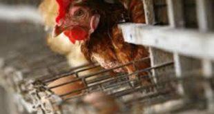 influenza aviaria padova hong kong