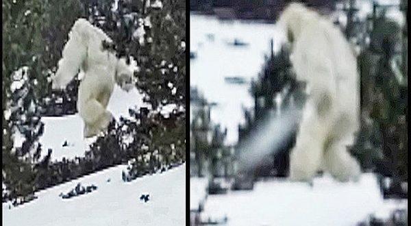 Svelato il mistero dello Yeti è solo un orso Himalaya